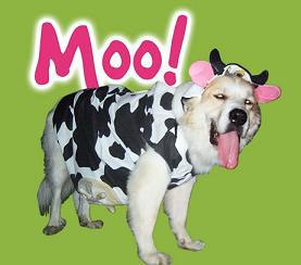 Dog in cow costume