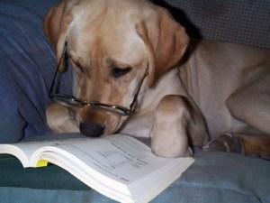 Dog reading book