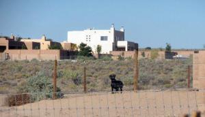 Labrador dog watching through his fence