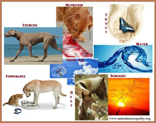 Laws of Health - Animals