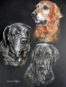 Portrait of Dr Kims Golden, Mastiff and Dane