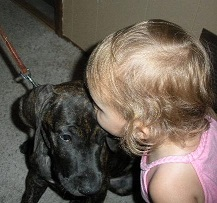 Dane puppy with child