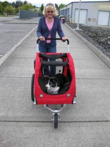 Border Collie mix in doggy buggy