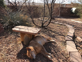Carolina Dog earthing