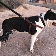 Dog ACL Brace – Natural Recovery