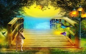 Carolina Dog at the Rainbow Bridge