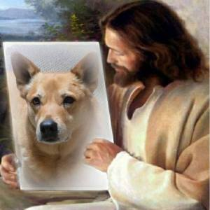 Jesus showing Carolina Dog
