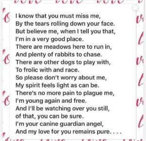 Dog loss poem