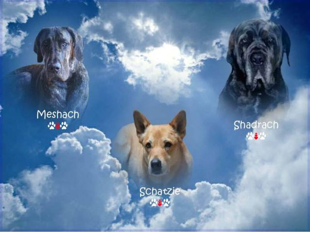 Three dogs in heaven