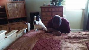 American Bully dog and his human praying together