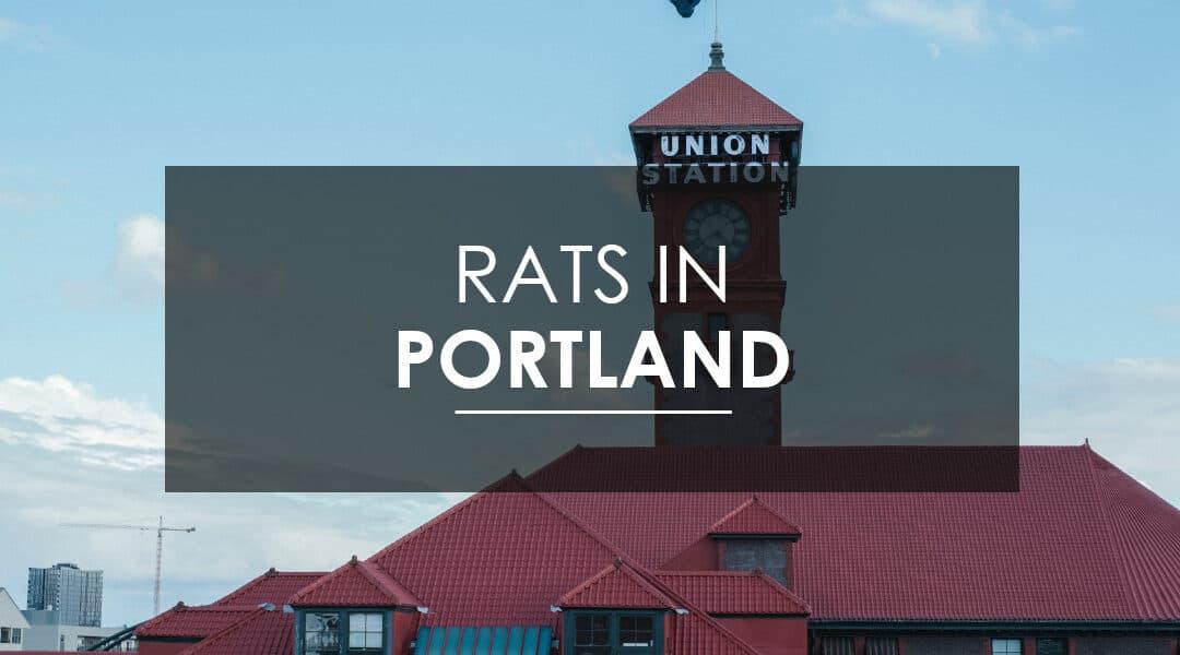 Rat Pest Control in Portland   Aspen Pest Control