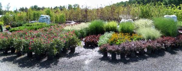 aspinall's tree nursery & landscaping