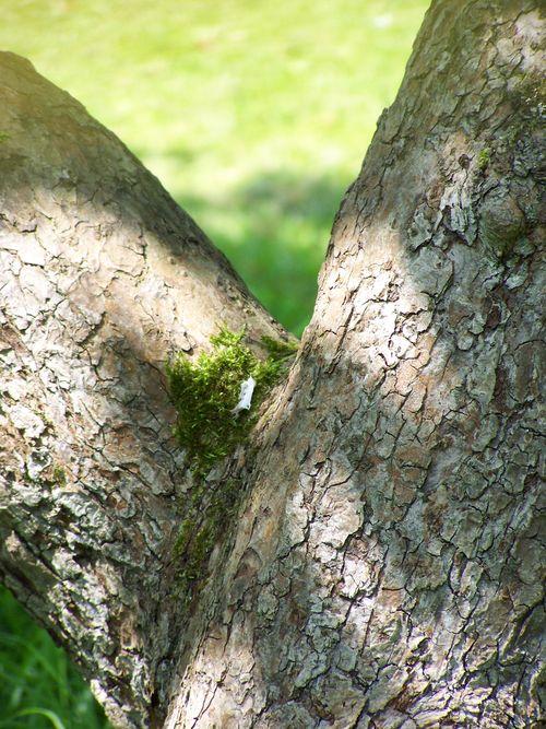 light on a tree trunk
