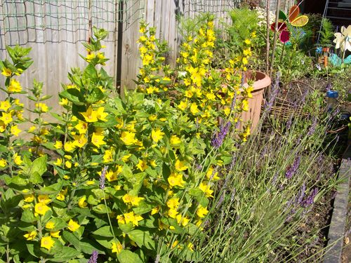 yellow and purple flowers growing in the garden