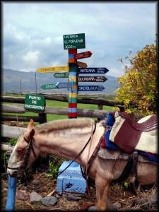 porvenir horse cotopaxi ecuador