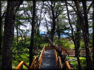 perito moreno glacier walkway trees photo