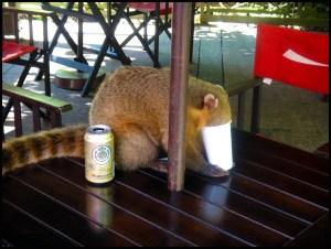 Iguazu Falls Drinking