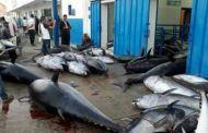 عصابة مدججة بالسيوف تهاجم وحدات لتصنيع الأسماك في الداخلة