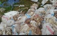 بالصور: العثور على كمية كبيرة من الدجاج النافق بسيدي بنور ؟!