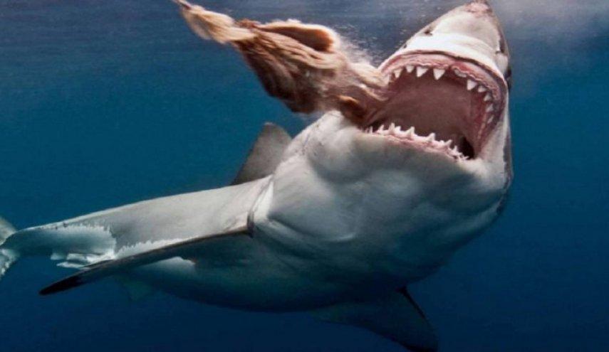 أسماك القرش تلتهم جثة لاعب كرة قدم