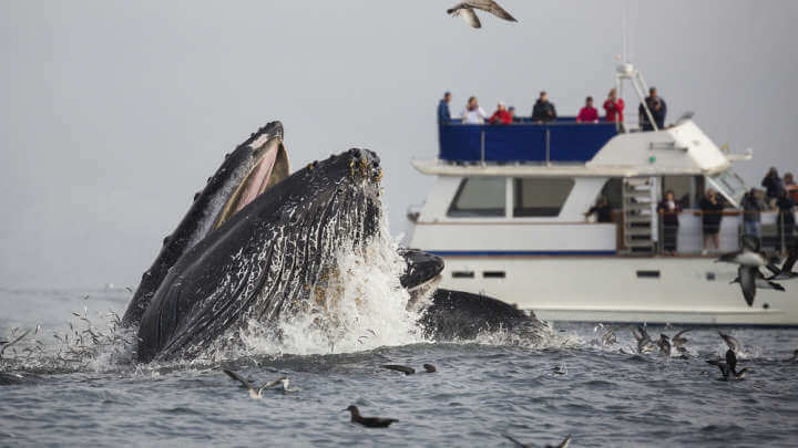 Video Shows Woman Hilariously Calling Police On Two Humpback Whales