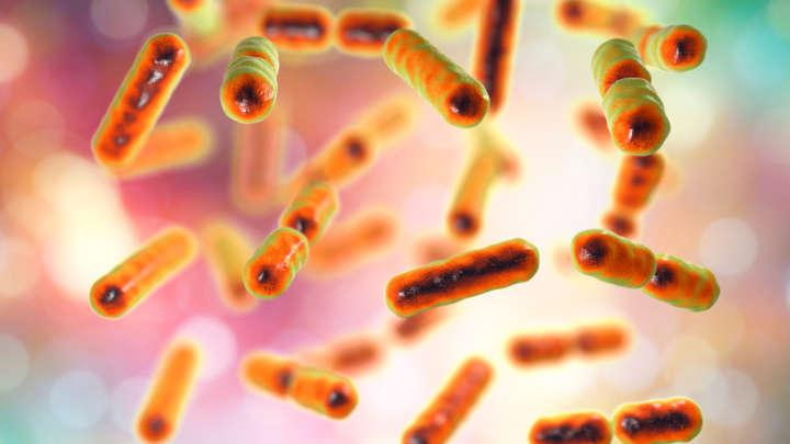 The Composition Of Your Gut Microbiome May Give Away Your Age, Says New Study