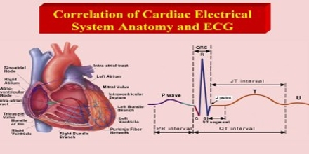 Cardiac Electrophysiology  Assignment Point