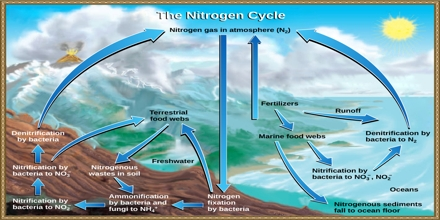 Biogeochemical Cycle Assignment Point