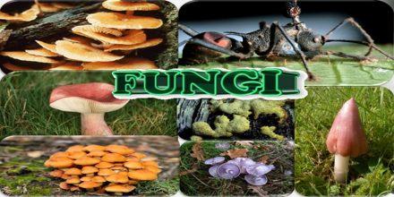 Kingdom Fungi Assignment Point