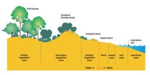 Coastal Environments: Sand Dune Systems  Assignment Point