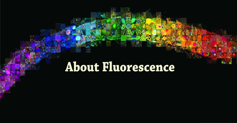 About Fluorescence Assignment Point