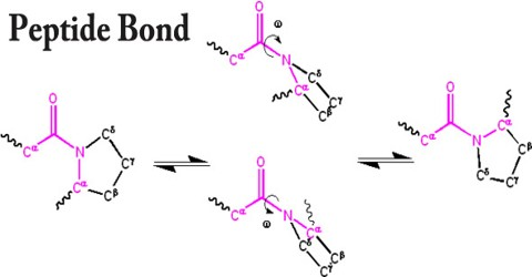 Peptide Bond Assignment Point