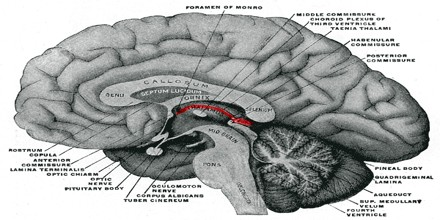 Epithalamus  Assignment Point