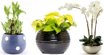 plantas que atraem a energia positiva