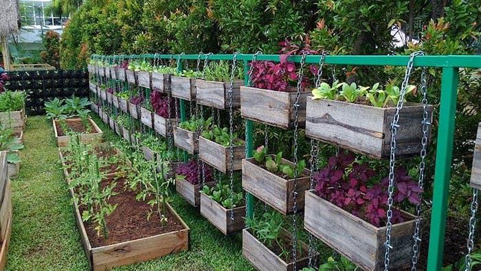 caixas suspensas de vegetais