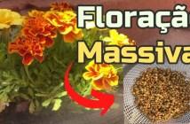 adubo floração