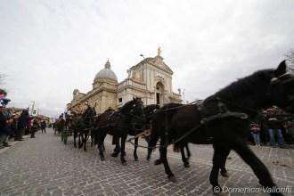 Assisi amica degli animali, la presentazione sabato 20 gennaio