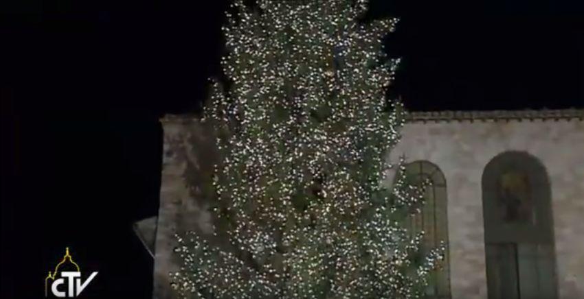 albero-assisi