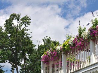 Concorsi balconi fioriti e infiorate 2018, premi speciali per chi rivitalizza