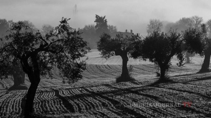 Fascia olivata Assisi-Spoleto in registro paesaggi storici importante