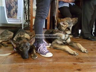 Zoe e Francesco, due lupi insieme ai bambini ad Assisi