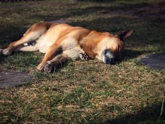 Polpette avvelenate, morti due cani al percorso verde Assisi Bastia