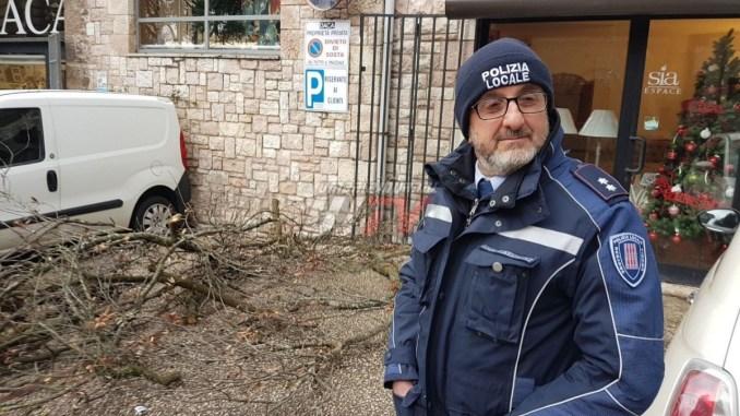 Cade albero in via Umberto I ad Assisi, pericolosità segnalata alla Provincia