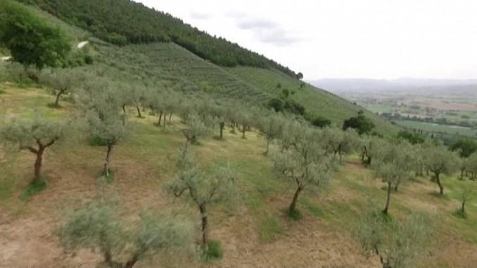 Maltempo e danni Fascia olivata Assisi Spoleto, presentazione domande