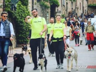 Cani, amicizia e passeggiata ad Assisi, città amica degli animali