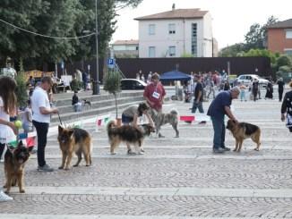 Esposizione amatoriale canina, grande successo a Santa Maria degli Angeli