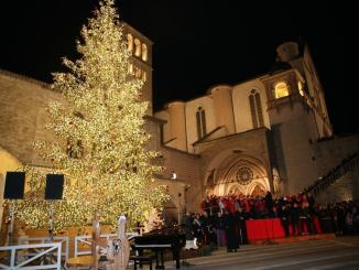 Acceso l'albero di Natale in piazza san Francesco ad Assisi | Video e foto