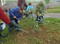 cecl-automne-2014-plantation-noisetier0019