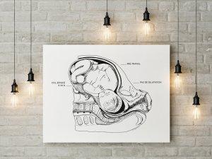 illustration d'anatomie de l'accouchement