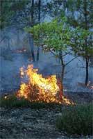 2010-10-macdormand